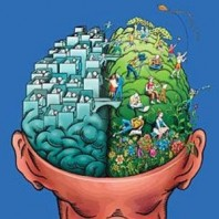 insan_beyni